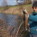 Der Aitel – ein schwerst unterschätzter Fisch