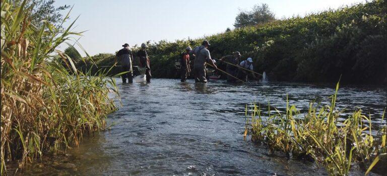 Befischung: Schwärme von Donaufischen und drei neue Arten gefangen (Mit Video)