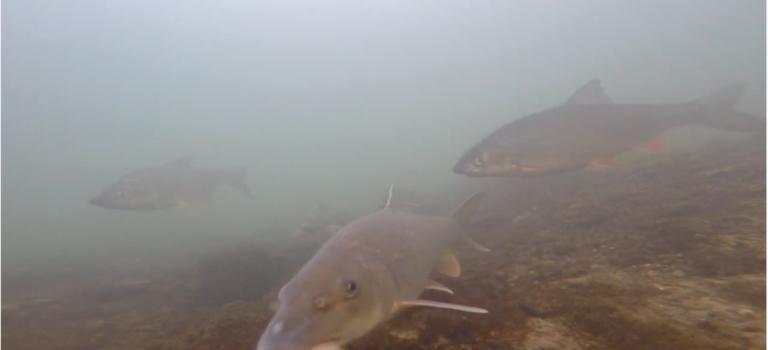 Was machen die Fische im Winter? Coronaparty im Revier!