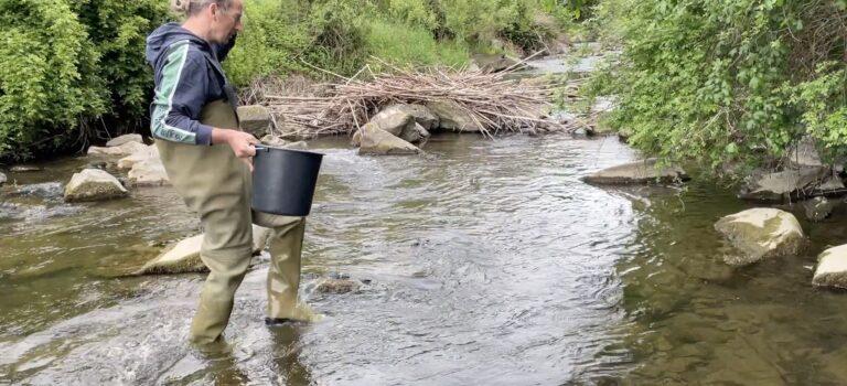 Operation Äsche: Wiederansiedelungsprojekt einer ausgestorbenen Fischart in der Grossen Tulln